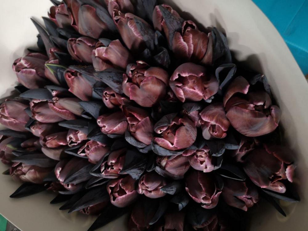 Букет из черных тюльпан минск